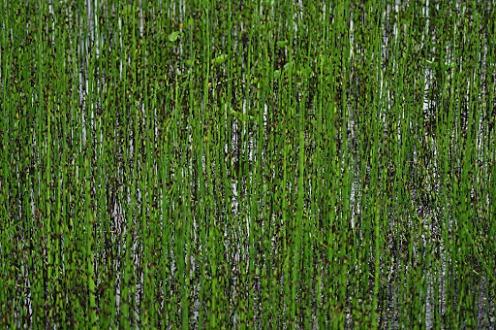 Norway: Arctic-alpine Botanical Garden
