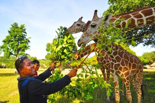 Busuanga: Calauit Wildlife Sanctuary