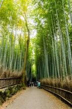 23172-arashiyama-101