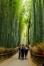 2afde-arashiyama-108