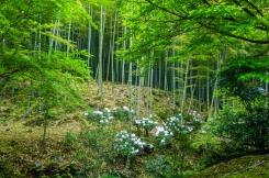 a61d1-arashiyama-88