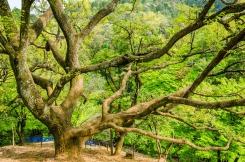 d8924-arashiyama-16