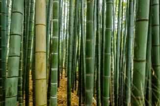 edc8e-arashiyama-94