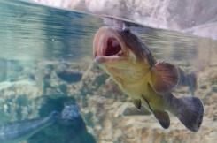 14db3-fish-1